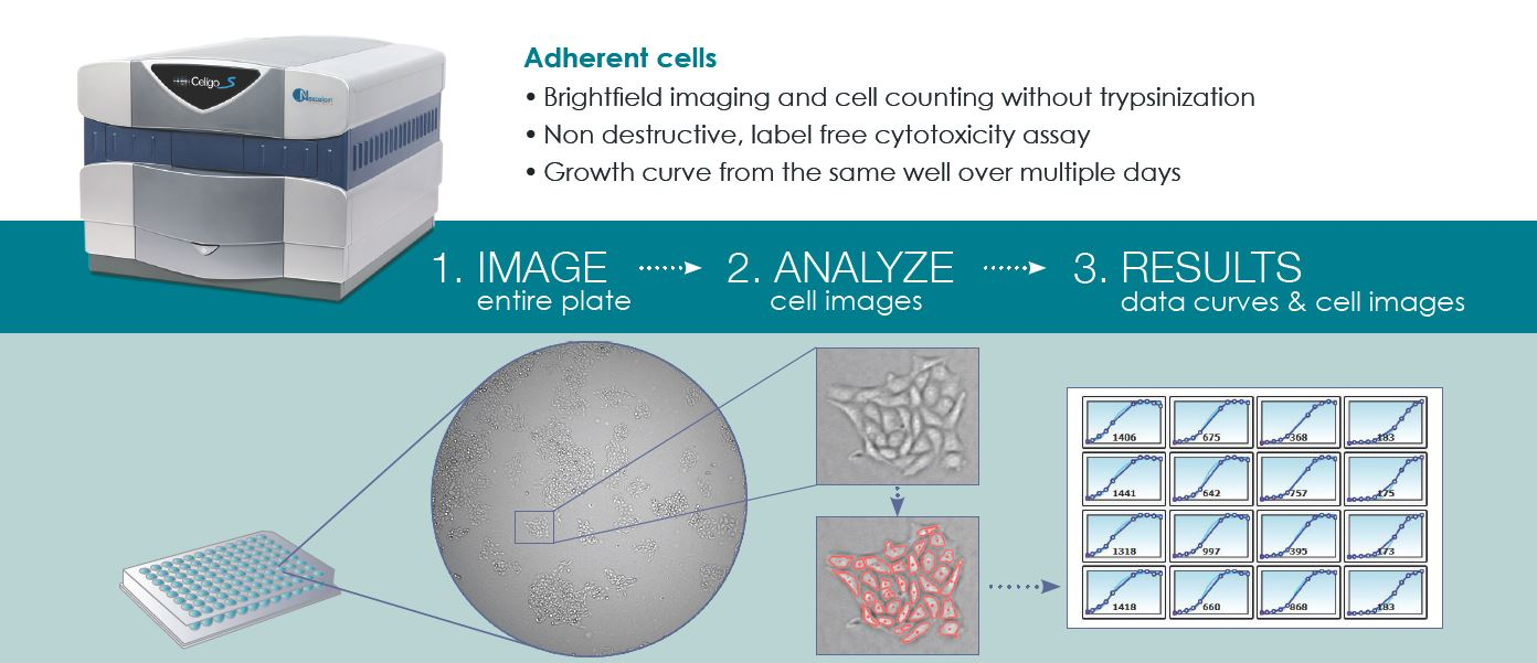 celigo adherent cells